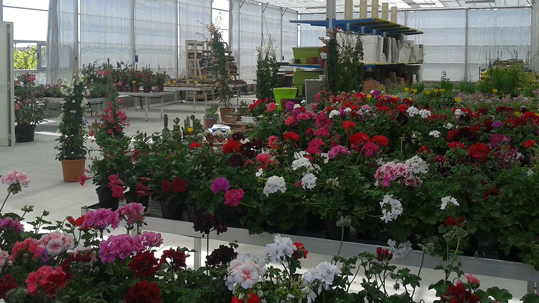 Area Garden