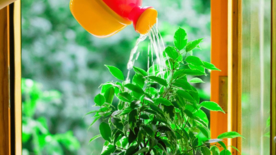 Come curare in inverno le piante da appartamento