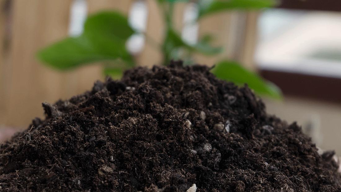 L'importanza dei materiali inerti per la vita della piante