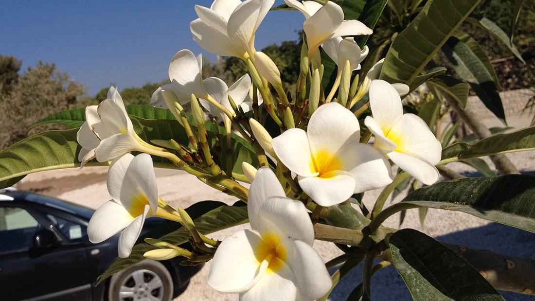 Come arredare la tua casa con le piante fiorite