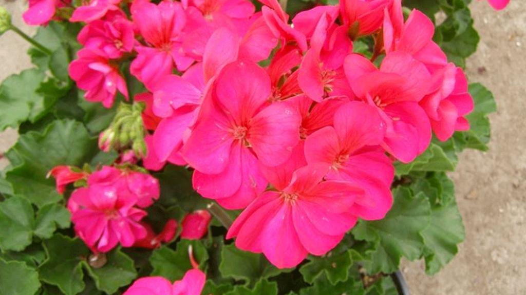 Come arredare la tua casa con le piante fiorite vivai for Come costruire la tua casa