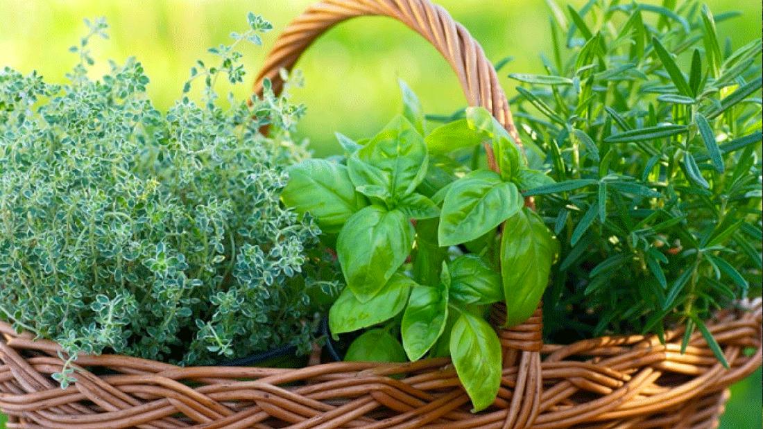 Abbellisci il tuo giardino con piante aromatiche