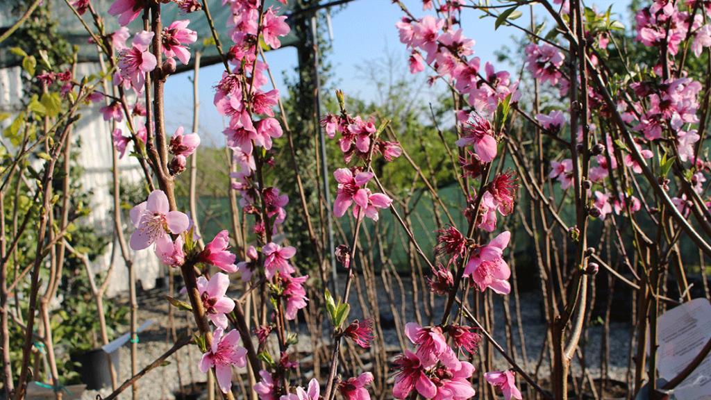 Le piante che fanno scenografia vivai giannuso a rosolini for Piante mediterranee da giardino
