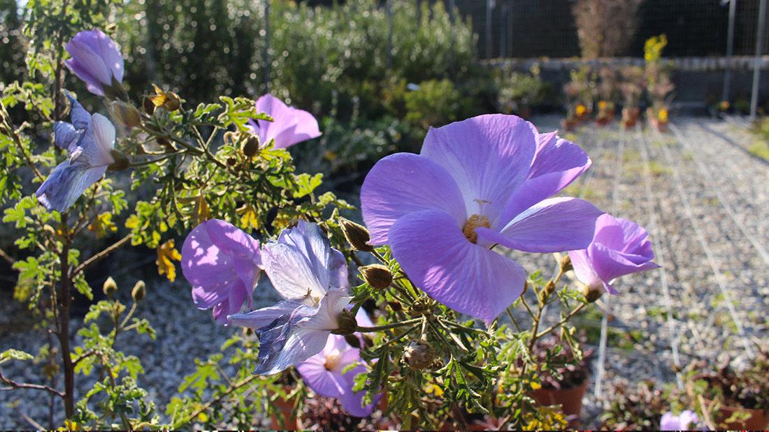 piante-da-giardino3