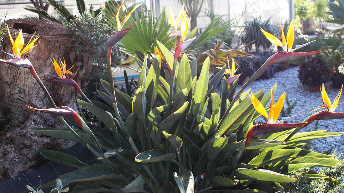 piante-da-giardino4