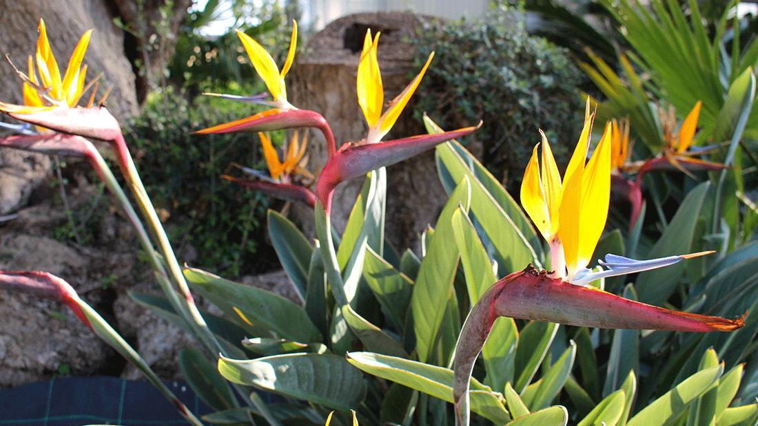piante11