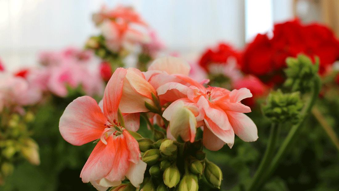 piante6