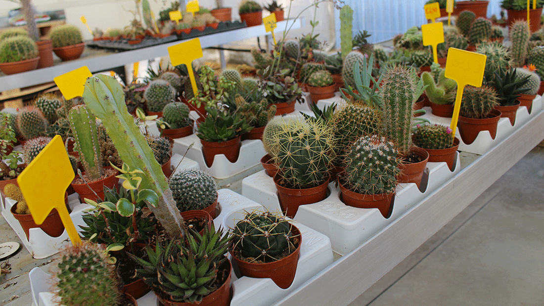 piante7