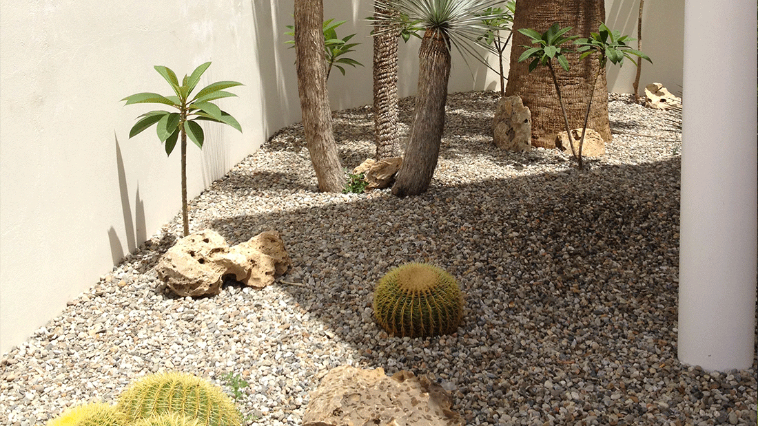 Le piante che fanno scenografia