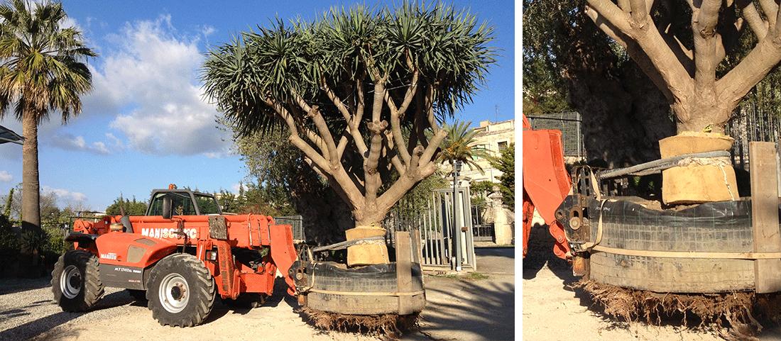 Trasporto movimentazione piante – Lavori di potatura